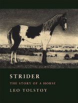 Strider:The Story of a Horse